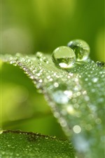 Green grass, leaves, water droplets, hazy background