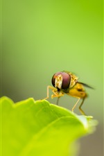 Preview iPhone wallpaper Green leaf, insect, bee