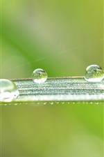 Preview iPhone wallpaper Green leaf, many water droplets