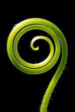 iPhone обои Зеленые растения щупальца, круги, черный фон