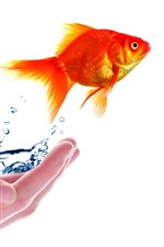 Preview iPhone wallpaper Hand, goldfish, water, white background, creative picture