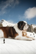 Preview iPhone wallpaper Huge dog, snow, winter, creative picture