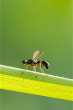 Insect, ant, green grass leaf