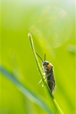 Preview iPhone wallpaper Insect, green leaf, green background