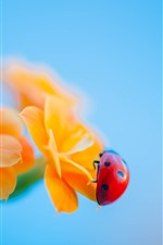 Preview iPhone wallpaper Ladybug, yellow flowers, hazy background