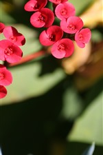 Little red flowers, stem
