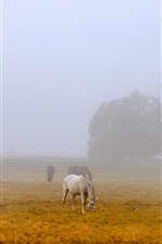 Preview iPhone wallpaper Morning, fog, some horses, grass