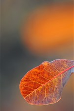 Preview iPhone wallpaper One leaf, hazy, autumn