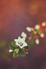 One little flower, hazy background