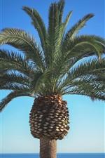One palm tree close-up, blue sea