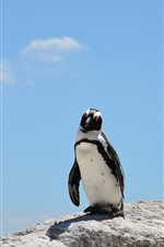Um pinguim, pedras