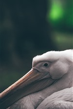 Preview iPhone wallpaper Pelican, long beak, bird close-up