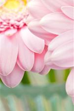 Preview iPhone wallpaper Pink chrysanthemum, petals close-up