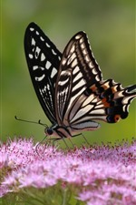Preview iPhone wallpaper Pink little flowers, butterfly, wings, insect