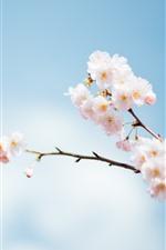 iPhone壁紙のプレビュー ピンクの桜、花、小枝、空、かすんだ