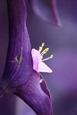 Preview iPhone wallpaper Purple flower close-up, pistil, purple background