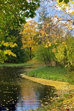 Preview iPhone wallpaper River, maple trees, leaves, autumn