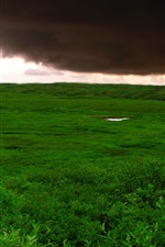 Preview iPhone wallpaper Thick clouds, storm, green grass