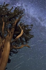 Preview iPhone wallpaper Tree, night, starry, sky