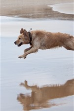 Preview iPhone wallpaper Two dogs running, beach, water