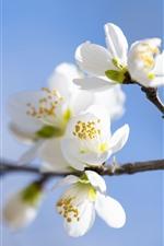iPhone壁紙のプレビュー 白い梅の花、小枝、かすんでいる、春