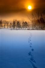 Winter, sunset, snow, trees, beautiful scenery