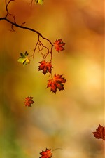 Autumn, red maple leaves, orange background