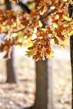 iPhone обои Осень, деревья, желтые листья, дымка