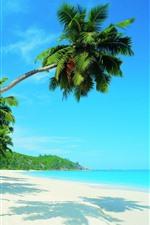 Preview iPhone wallpaper Beautiful tropical scenery, palm trees, beach, sea, sunshine