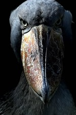 Preview iPhone wallpaper Black bird, big beak, eyes, darkness