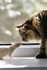 Preview iPhone wallpaper Cat and white mouse, face to face, window