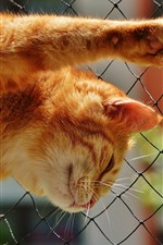 Preview iPhone wallpaper Cat climb wire fence