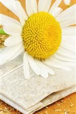 iPhone обои Ромашка, белые лепестки, цветок крупным планом