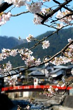 Preview iPhone wallpaper Countryside, sakura bloom