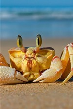 Preview iPhone wallpaper Crab front view, beach, sea