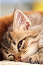 Preview iPhone wallpaper Fluffy kitten, pet
