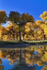 Preview iPhone wallpaper Golden autumn, trees, lake, water reflection