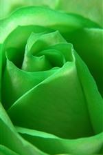iPhone壁紙のプレビュー 緑の花びらのバラのクローズアップ、花