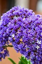 Many purple little flowers, bouquet