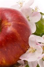 Uma maçã vermelha e flores de maçã