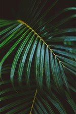 Preview iPhone wallpaper Palm leaves, darkness