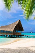 Palm trees, beach, sea, pier, tropical, resort