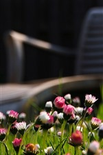 Preview iPhone wallpaper Pink and white flowers, chair