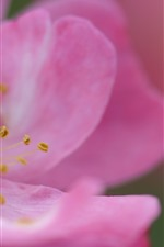 Preview iPhone wallpaper Pink flower macro photography, petals, pistil, hazy