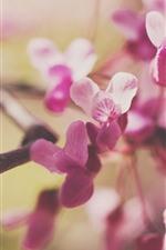Flores cor de rosa, galhos, nebulosos