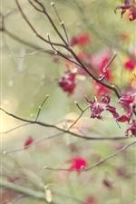 iPhone обои Красные листья, веточки, туман, осень