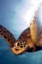 Preview iPhone wallpaper Sea, underwater, turtle, swimming, glare background