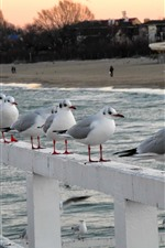 Preview iPhone wallpaper Seagulls, fence, sea, beach