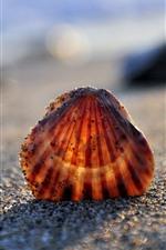 Seashell, beach, hazy