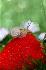 Preview iPhone wallpaper Strawberry and snail